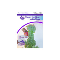 SUPER NORTHEN LIGHT HAZE (1) 100% MOON GENETIC