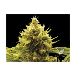 CHEESE X CRITICAL (1) 100% EXCLUSIVE SEEDS BANK