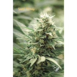 Agartha cbd (1) 100% super strains (hy-pro)