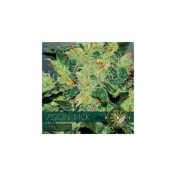 Vision jack (3) auto vision seeds