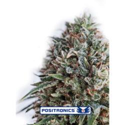 CBD+CRITICAL 47 (1) 100% POSITRONICS