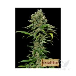 EXCALIBUR (3) 100% EVA SEEDS