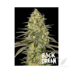 BLACK DREAM (3) 100% EVA SEEDS