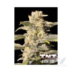 TNT KUSH CBD (3) 100% EVA SEEDS