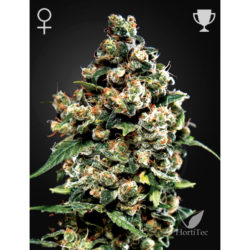 JACK HERER (3) 100% GREEN HOUSE